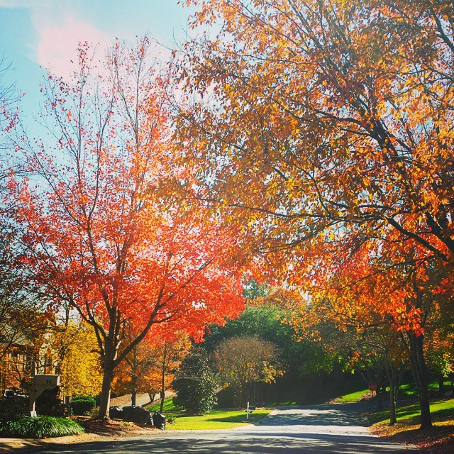 One of the best things about working in #charlotterealestate is being able to be outside on these beautiful fall days...